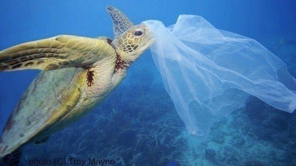 Plastik Poşetlerin Ücretlendirilmesi Hakkında Bilgilendirme